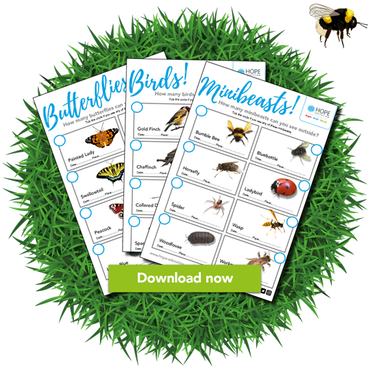 Butterflies, birds and minibeasts worksheets