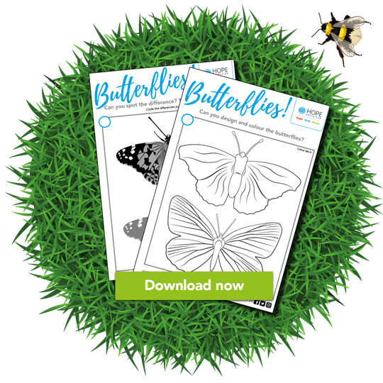 Butterfly colouring worksheet